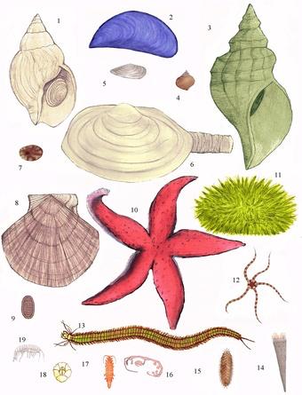 3-Benthic_animals-(D)-Various_benthic_animals--(copyright-Kristin_L_V).jpg