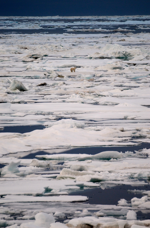 BLOG polar bear.jpg
