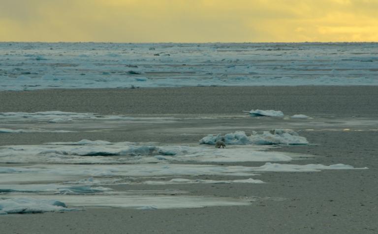 Jil polar bear ice.jpg