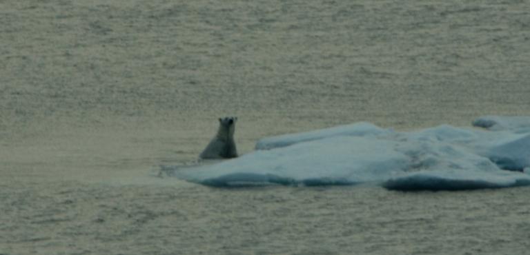 Jil polar bear water.jpg