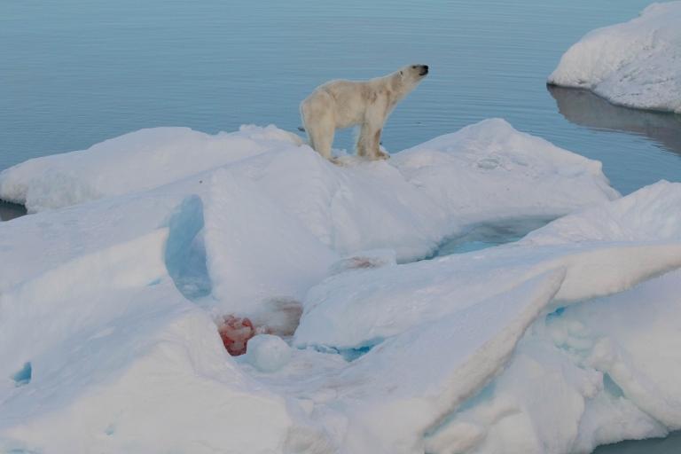 polar bear up close 7.jpg